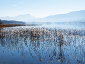 Austria, Salzkammergut, Irrsee - WWF04681