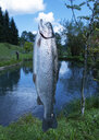 Trout on fishhook - WWF04696