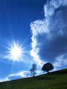 Austria, Salzkammergut, Mondsee, rural landscape in backlight - WWF04710