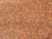 Cobblestones - WWF04755