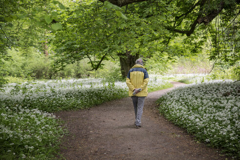 Germany, Ruegen, Putbus, man walking in park with blossoming ramson - MAMF00297