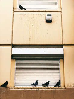 Portugal, Lisbon, Pigeons Sitting on Window Sill - JUBF00295