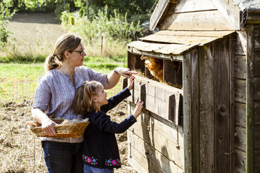 Woman and girl collecting eggs from a chicken house. - MINF09832