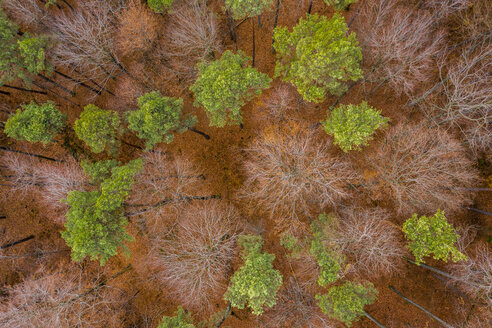 Germany, Baden-Wuerttemberg, Swabian Franconian forest, Aerial view of forest in autumn - STSF01822