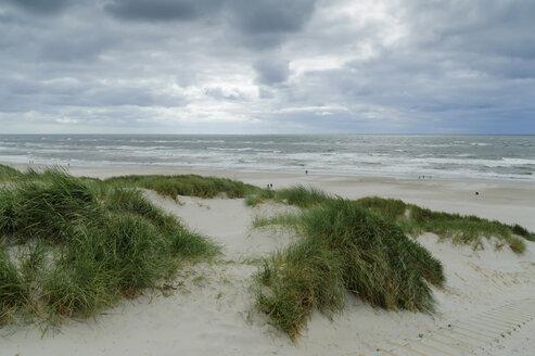 Denmark, Jutland, Henne Strand, dunesand North Sea - UMF00865