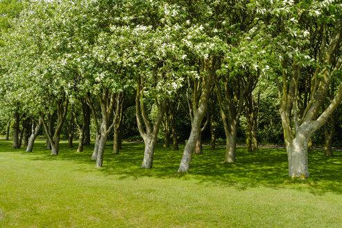 Denmark, Jutland, Sonderborg, trees in a park - UMF00913