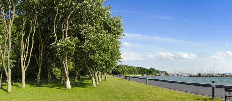 Denmark, Jutland, Sonderborg, trees in a park at the coast - UMF00919