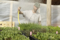 Gardener watering plants in Sweden - FOLF09696