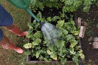 Woman watering garden - FOLF10225