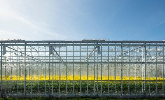 Greenhouse in autumn, Hoek van Holland, Zuid-Holland, Netherlands - CUF46859