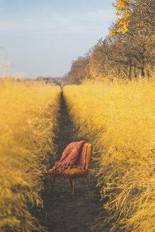 Orange chair in asparagus field in autumn - ASCF00913