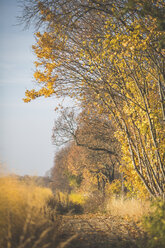 Forest next to asparagus field in autumn - ASCF00931