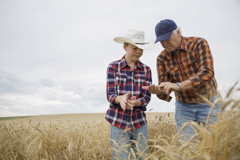 Grandfather and grandson examining wheat crop - HEROF04784