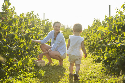 Mother and little daughter picking raspberries in summer - DIGF05592