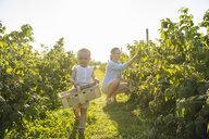 Deutschland, München, Mutter 36 Jahre, Kind 1 Jahr, Familie, Beeren pflücken, Natur, Sommer - DIGF05601