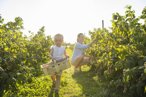 Mother and little daughter picking raspberries in summer - DIGF05601