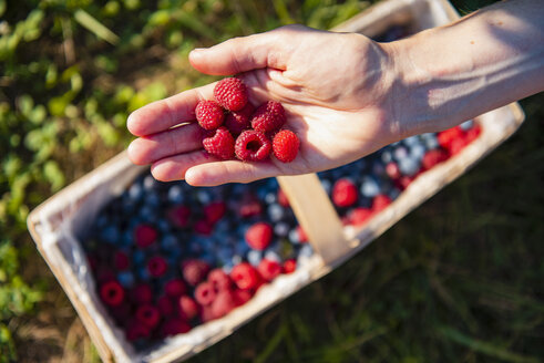 Pickes raspberries on woman's hand - DIGF05604