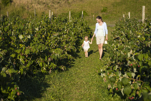 Mother and little daughter picking raspberries in summer - DIGF05607