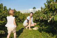Deutschland, München, Mutter 36 Jahre, Kind 1 Jahr, Familie, Beeren pflücken, Natur, Sommer - DIGF05610