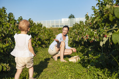 Mother and little daughter picking raspberries in summer - DIGF05610