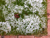 Snow on grass - JTF01155