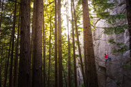 Rock climber scaling rock face close to trees, Squamish, Canada - CUF46924
