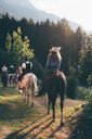 Young adult friends horse riding by forest, rear view, Primaluna, Trentino-Alto Adige, Italy - CUF47518
