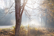 Landscape with rural road and woodland in rays of misty autumn sun, Lohja, Southern Finland, Finland - CUF47893