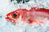 Pink fish at fish market in Naha, Japan - ASTF02139