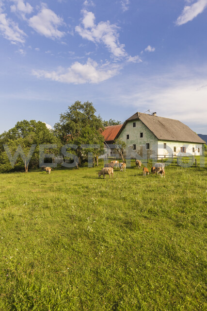 Austria, Carinthia, old farm house and cows on pastue - AIF00572