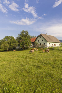 Austria, Carinthia, old farm house and cows on pastue - AIF00572