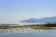 Montenegro, Bar province, Lake Skadar - SIEF08323