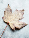 Water droplets on upside down autumn leaf, still life, overhead view - CUF47949