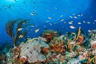 Reef life, Alacranes, Campeche, Mexico - CUF48045