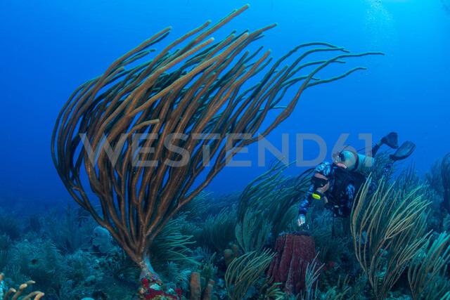 Diver exploring reef life, Alacranes, Campeche, Mexico - CUF48048