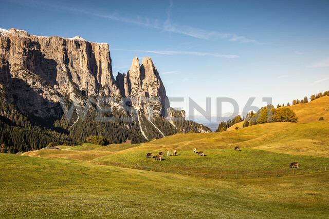 Herd of cows in distance, Schlern-Rosengarten on Seiser Alm, Dolomites, Siusi, Trentino-Alto Adige, Italy - CUF48296 - Manuel Sulzer/Westend61