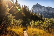 Hiking trail, Karwendel region, Hinterriss, Tirol, Austria - CUF48308