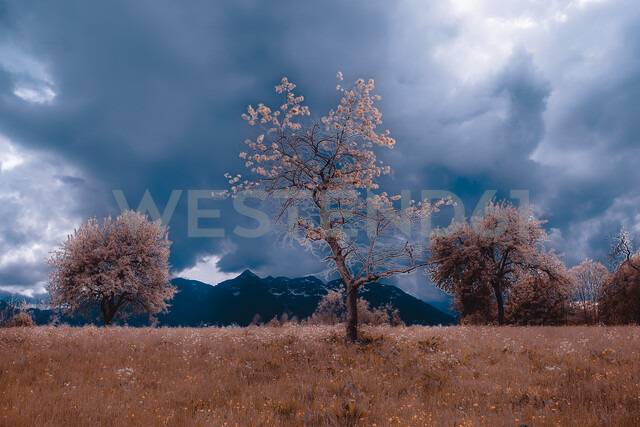 Autumn landscape with meadow and storm clouds over mountains, Francenigo, Veneto, Italy - ISF20215
