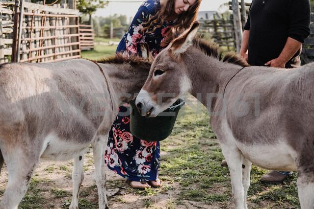 Couple feeding pet donkeys - ISF20230