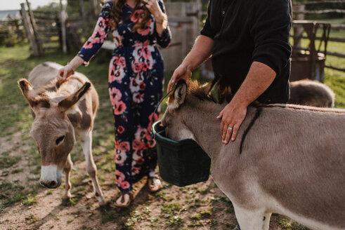 Couple feeding pet donkeys - ISF20245