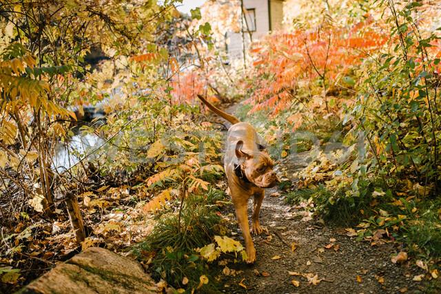 Dog exploring park alone - ISF20386 - Viara Mileva/Westend61