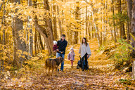 Family of four and dog in forest - ISF20395