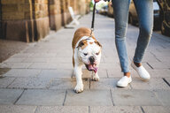 Low section of woman walking with English bulldog on sidewalk - MASF10924