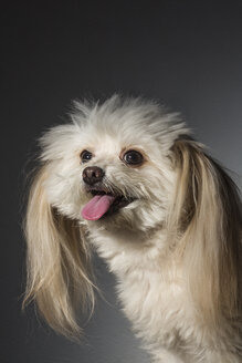 Portrait cute dog - FSIF03764