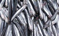 Italy, Naples, fish market - WWF04853