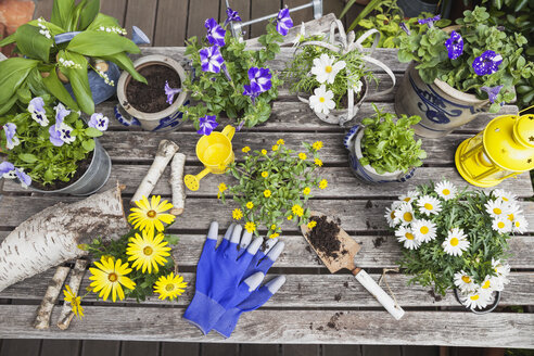 Different summer flowers and gardening tools on garden table - GWF05774