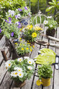 Different summer flowers and gardening tools on garden table - GWF05777