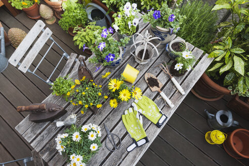 Different summer flowers and gardening tools on garden table - GWF05783