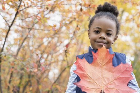 Portrait girl holding large orange autumn leaf in woods - HEROF05826