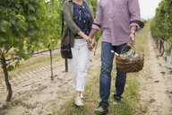 Senior couple with picnic basket holding hands and walking in vineyard - HEROF05996